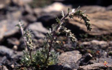 Plantes Comestibles Toxiques 1 Yaka Survie Stages De Survie