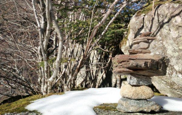 yakasurvie decouverte nature stage 2019