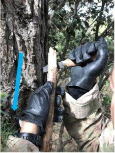 yakasurvie couteau travail arbre mort