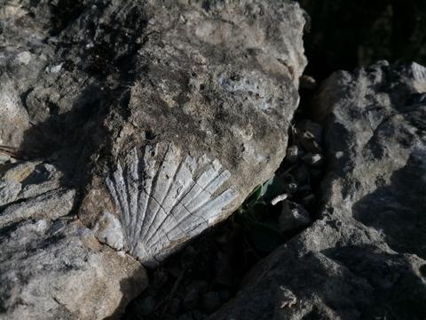 fossile yakasurvie decouverte