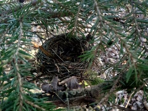 yakasurvie decouverte nid arbre