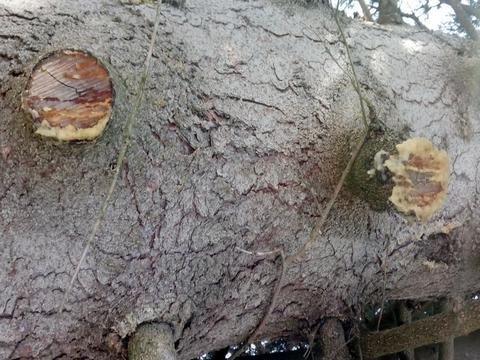 bois gras decouverte yakasurvie