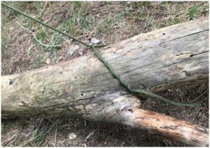 de bois yakasurvie noeud